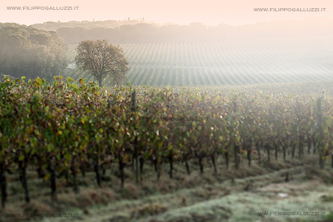 foto chianti vigne, paesaggio