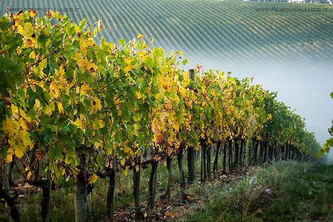 Autunno nel chianti senese, vigne