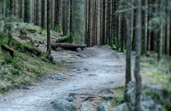 solitudine , bosco